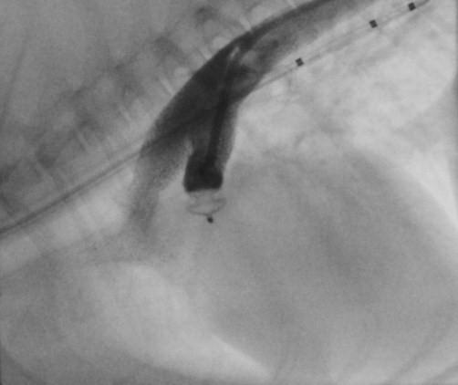 cardiologie-hartkat-foto-9